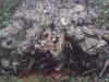 treetrunk.web