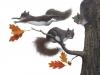 falkenstern-squirrels