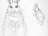 rabbit sketch.copy
