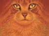 catmasterfinal